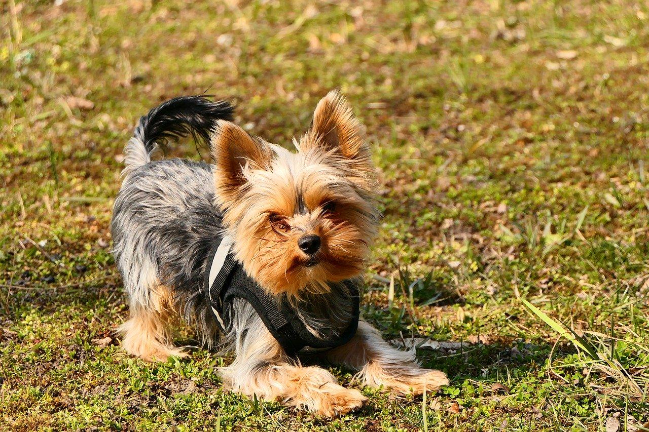 Prawidłowa pielęgnacja sierści psa